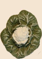 choux fleur1
