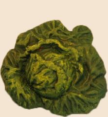 choux vert1