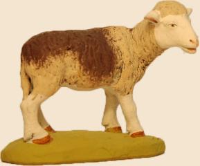 mouton fonce